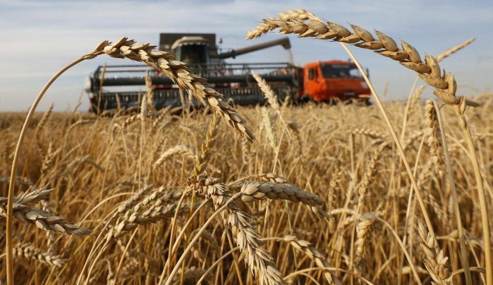 La campaña de trigo 2021/22 podría alcanzar los 20,2 millones de toneladas, la mayor de la historia argentina.