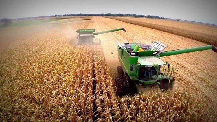 Inoportuno: la falta de lluvias complica la producción de soja