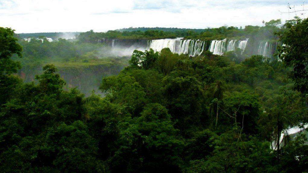 Plantas de la selva misionera: especies increíbles