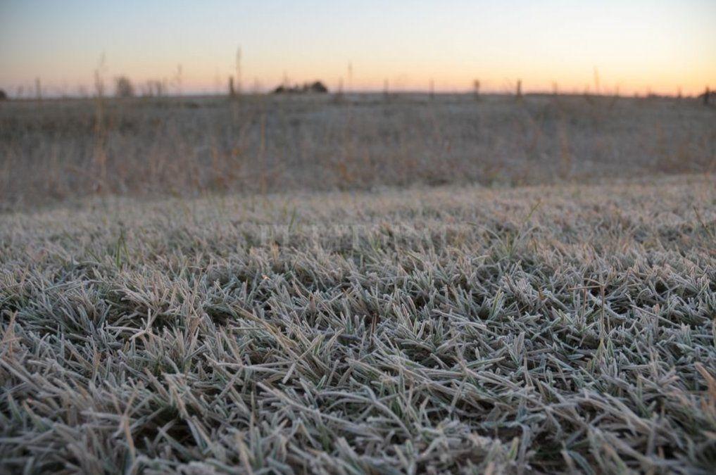 Con las bajas temperaturas, llegaron las primeras heladas al campo