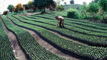FAO pide transformar la agricultura en América Latina y el Caribe