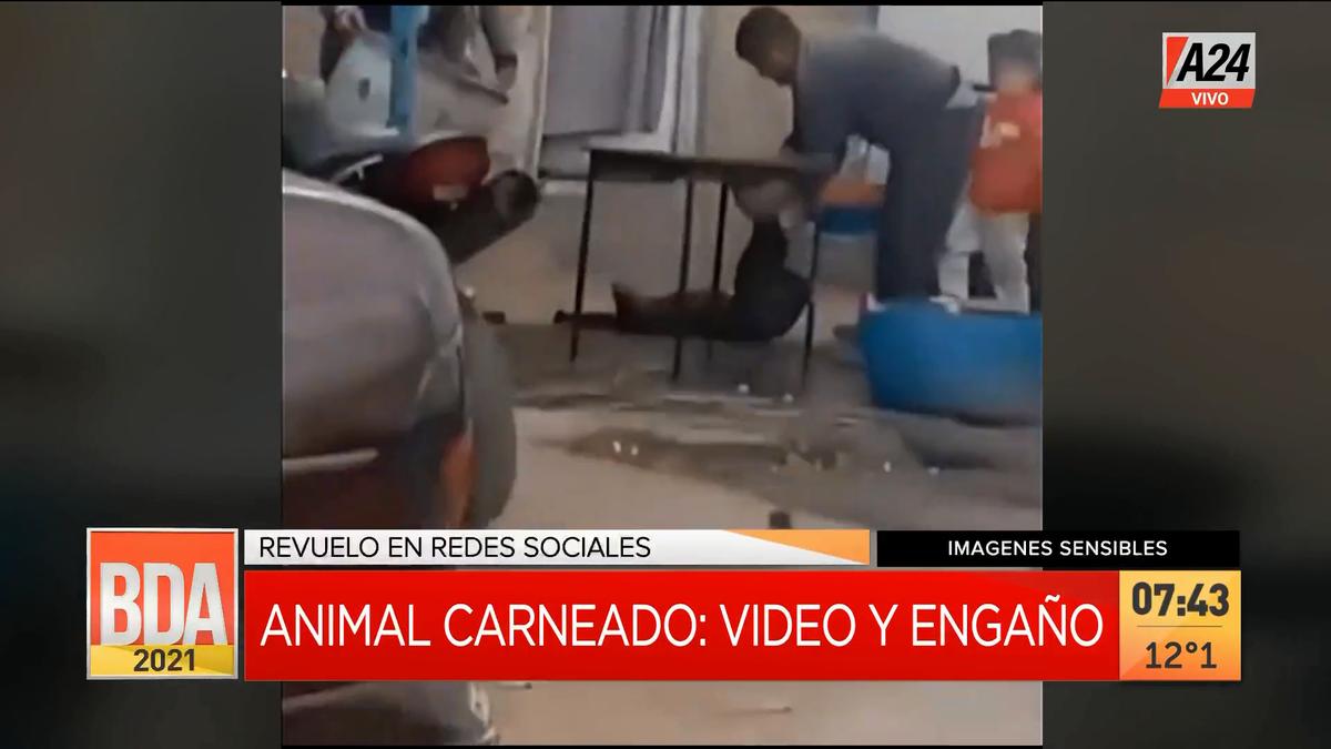 Conmoción por una Fake News de un animal carneado en el comedor Niños con Sueños