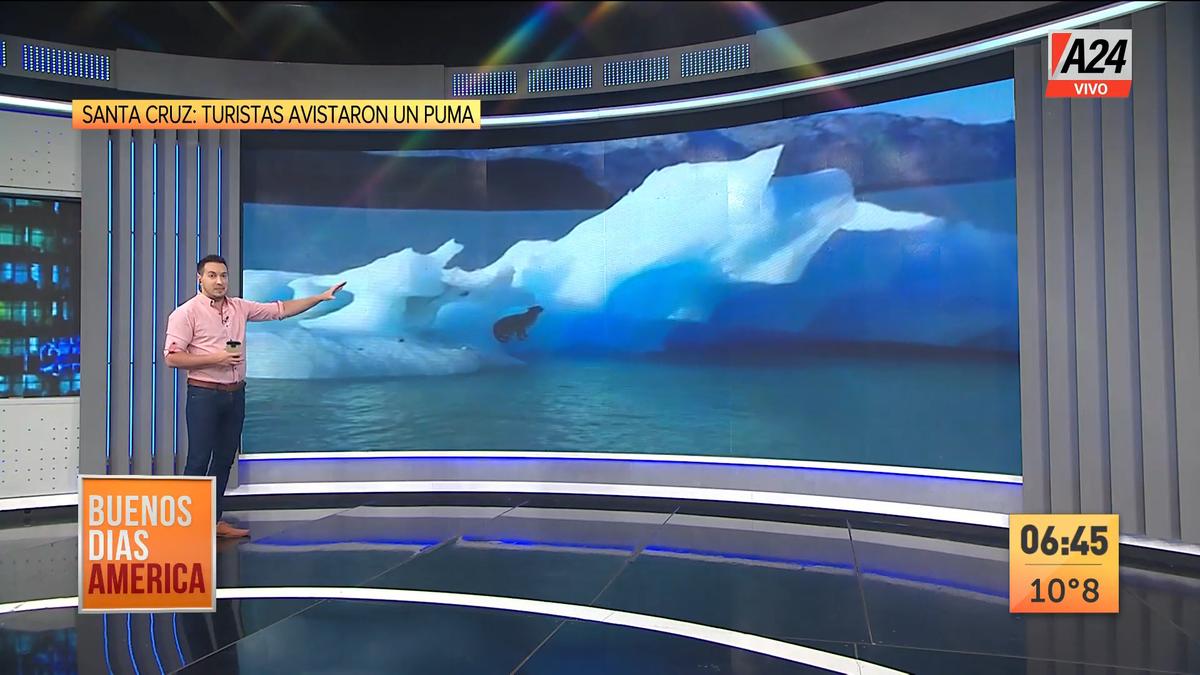 Santa Cruz: se vio a un puma suelto en un témpano de hielo. (Captura de Tv)