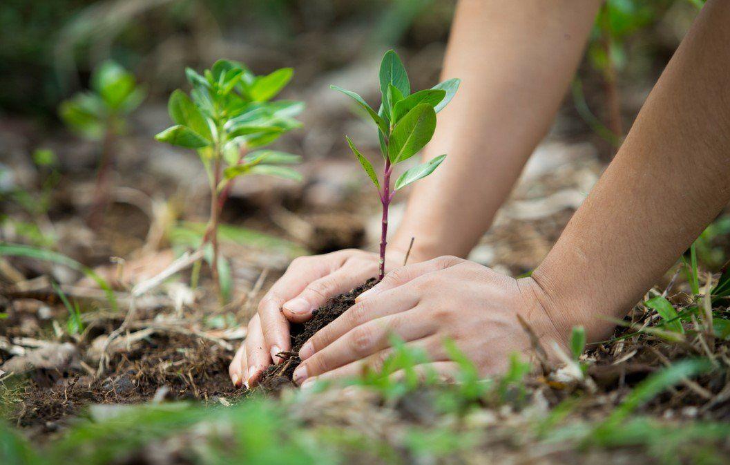 Cuidado del medio ambiente en Argentina