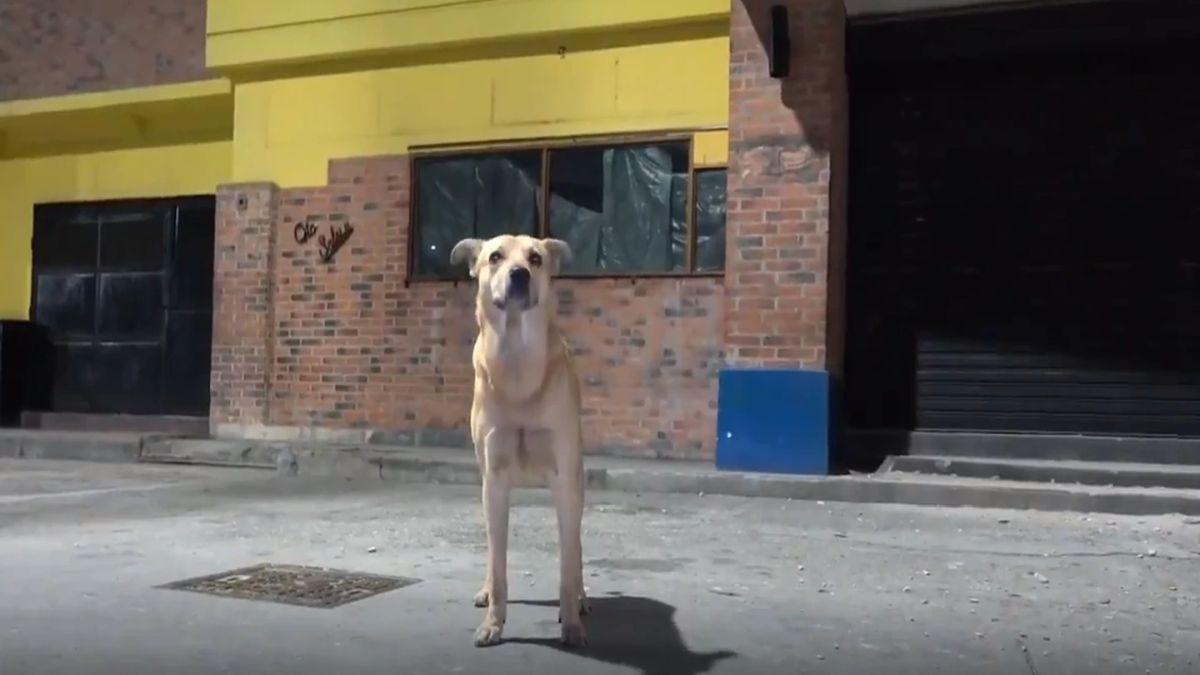 Muchos vecinos del local relacionaron esta historia con el perro Hachiko