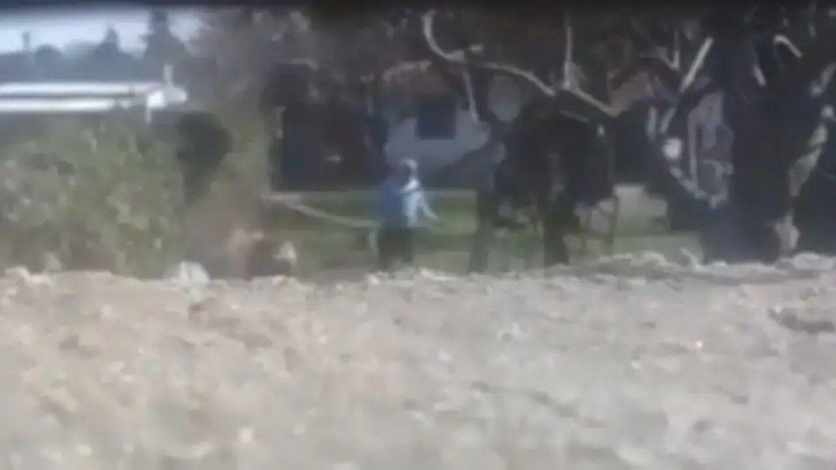 El momento en que el hombre cuelga a su perro fue registrado por vecinos.