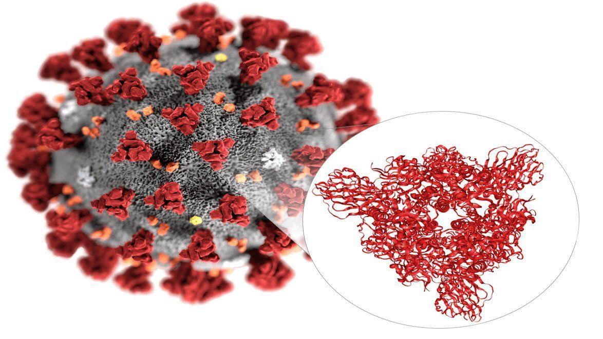 Advierten que la cepa actual del COVID-19 tiene una capacidad de infectar seis veces mayor que la original