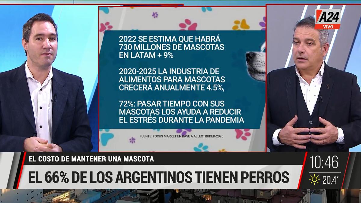 ¿Cuánto cuesta mantener a un perro o un gato en la Argentina? (Captura de Tv)