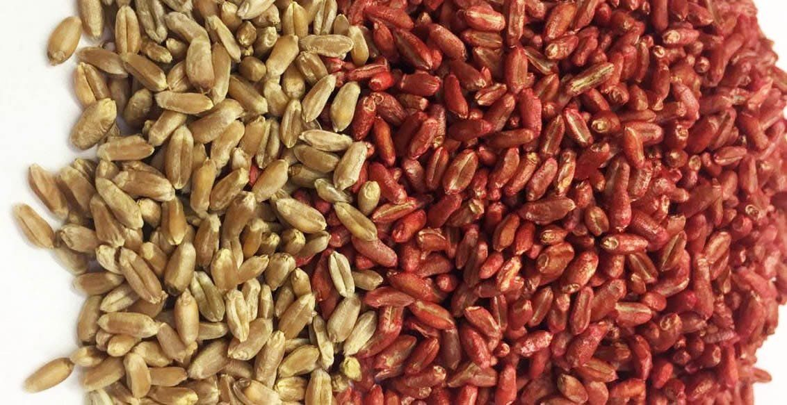 Las semillas de Top Speed aportan zinc al trigo de cara a esta campaña.