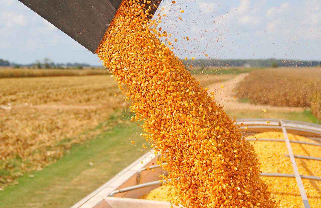 Una ventana inesperada para el maíz argentino ante la dura sequía que afecta a Brasil.