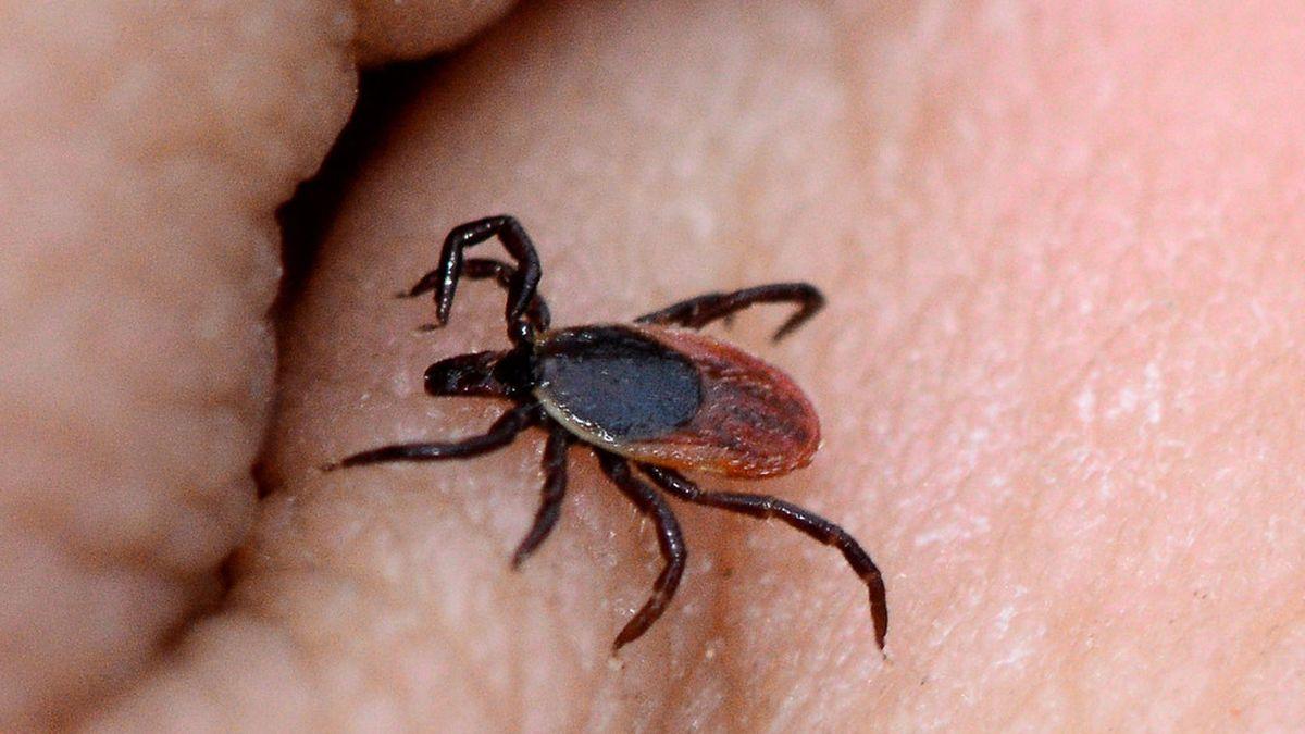La enfermedad de Lyme es provocada por la mordedura de una garrapata infectada.