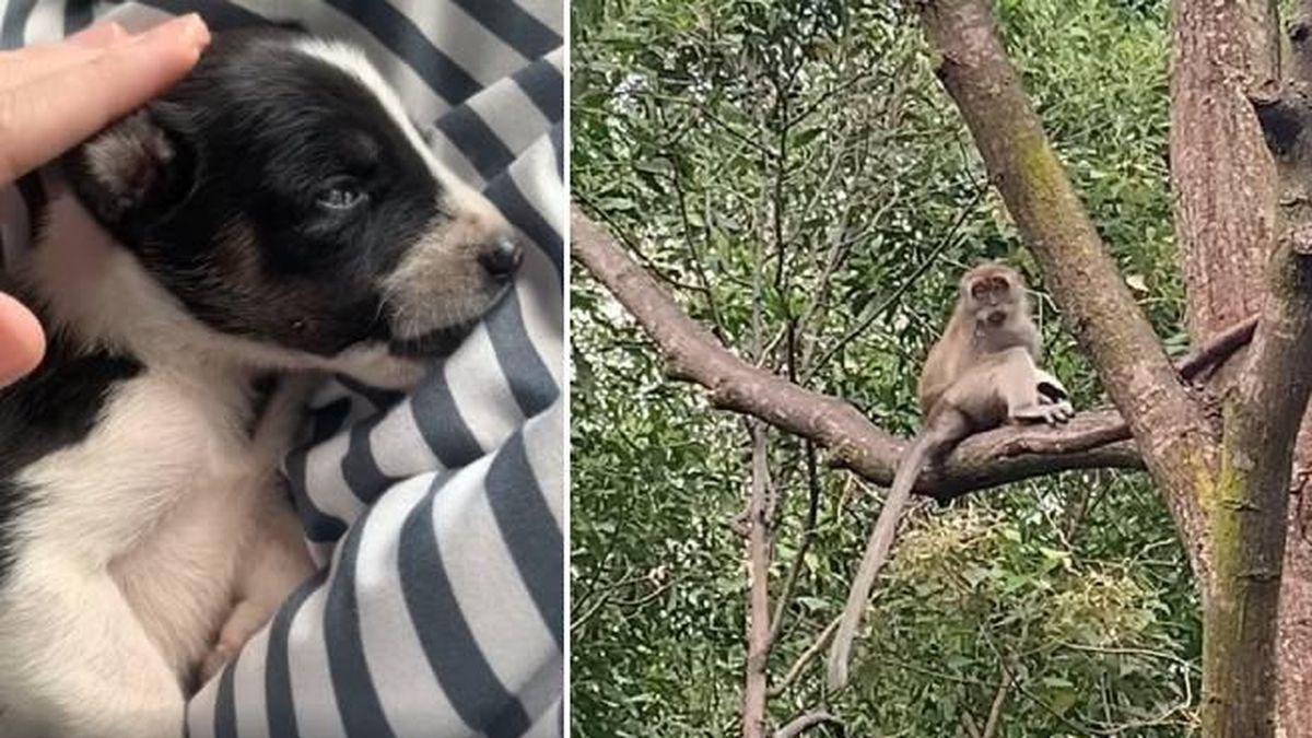 Rescatan a un cachorro de perro de las manos de un mono salvaje.