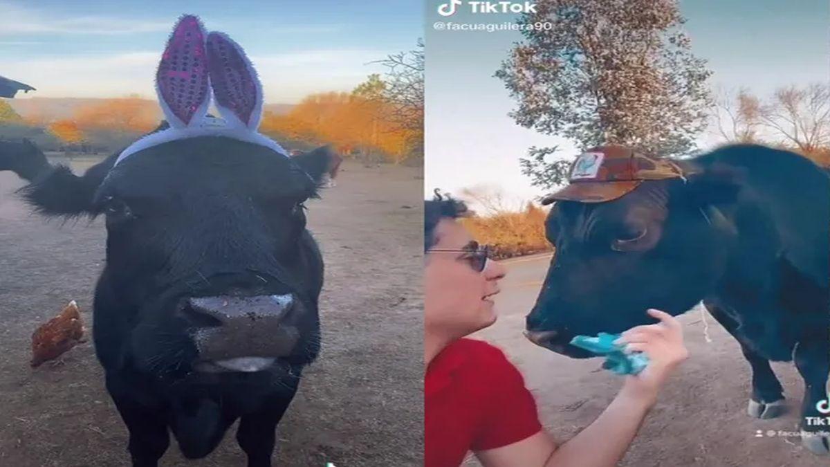En los videos compartidos en TikTok se puede ver al animal saltando