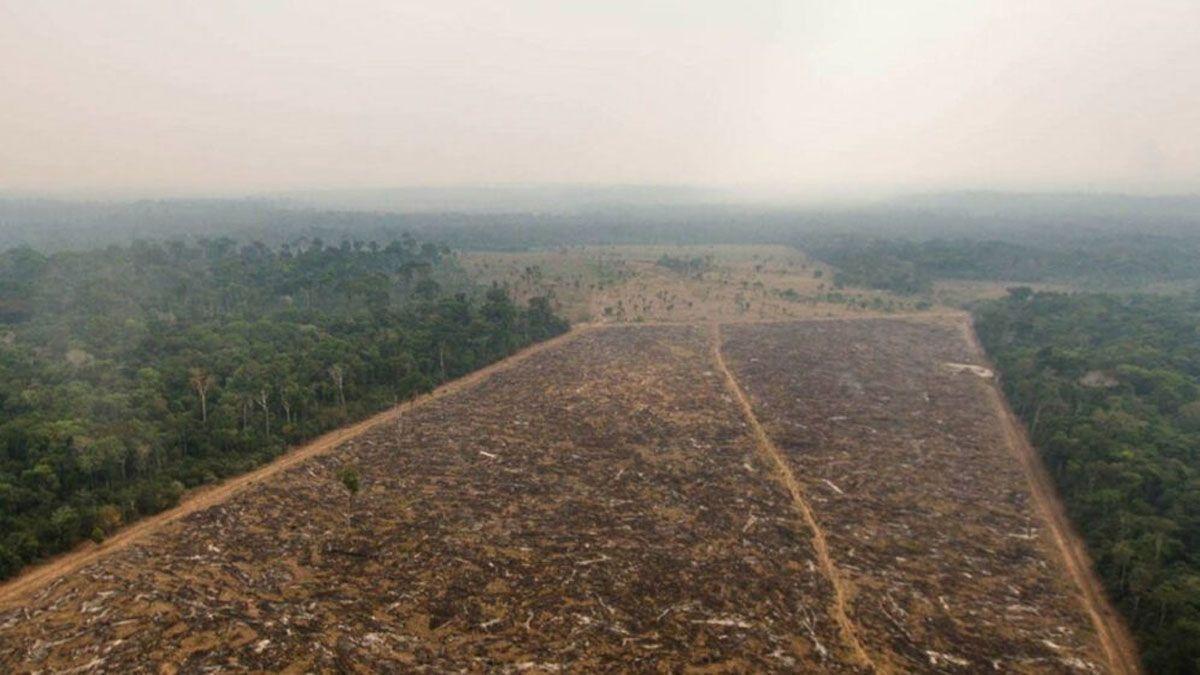 Un estudio encontró que la parte sureste y este de la Amazonia está funcionando más como emisor que como sumidero de carbono. (Foto: Márcio Isensee e Sá/Flickr)