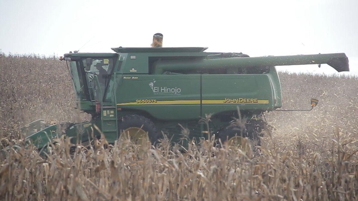 La agricultura también es una parte importante dentro del esquema comercial de los Cerini.