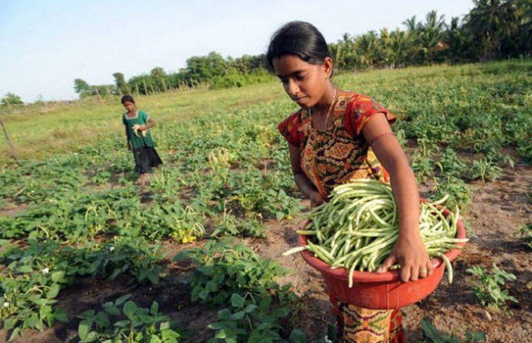 Agricultoras en una pequeña propiedad en Sri Lanka. Aunque solo producen 35 por ciento de los alimentos
