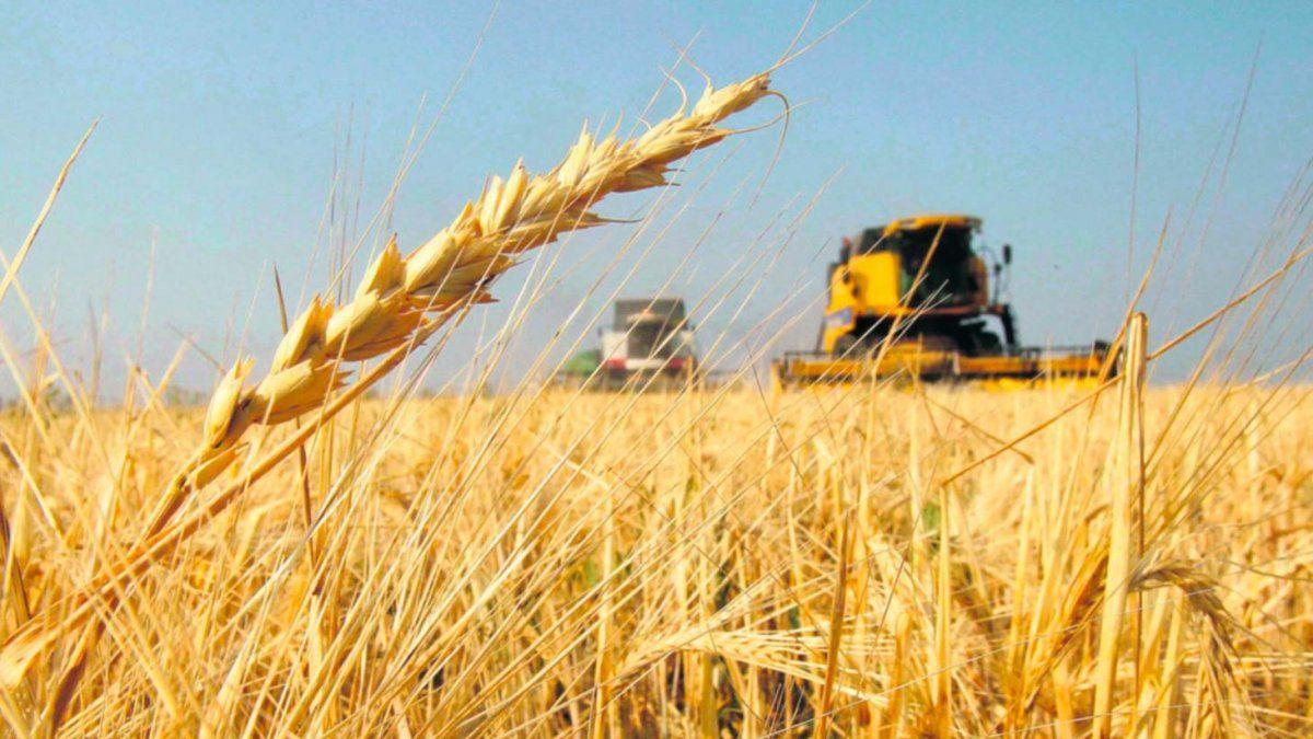 La estimación climática le da un fuerte espaldarazo a los productores de trigo.