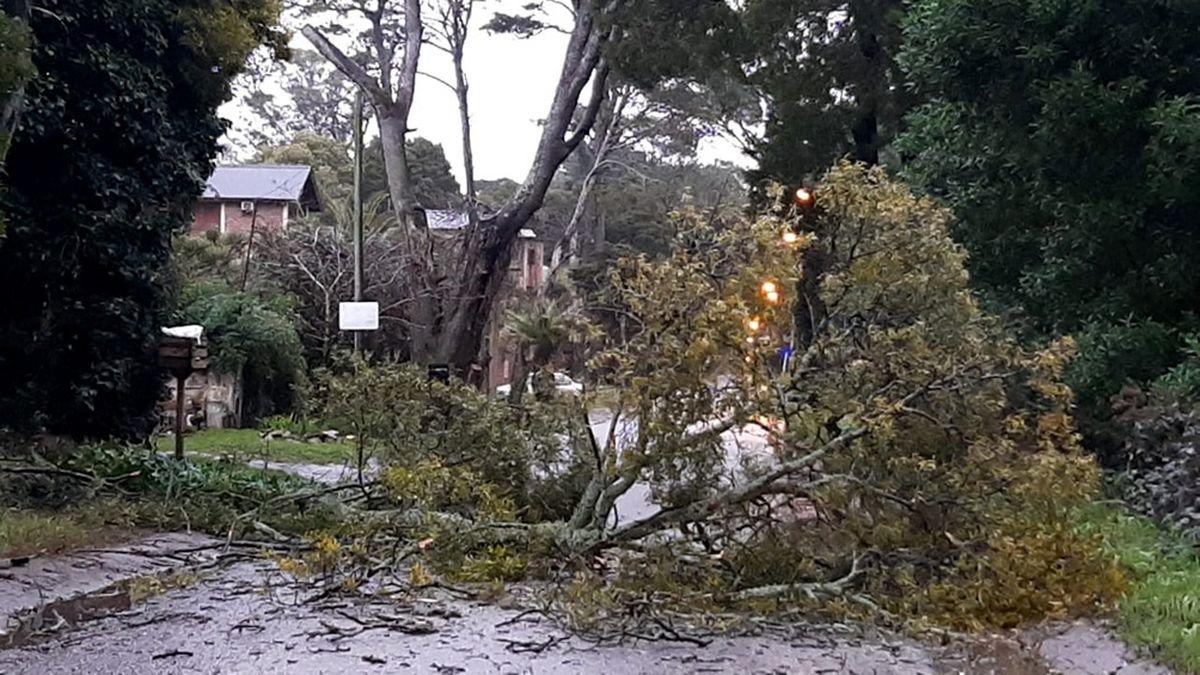 El temporal se sintió en Pinamar