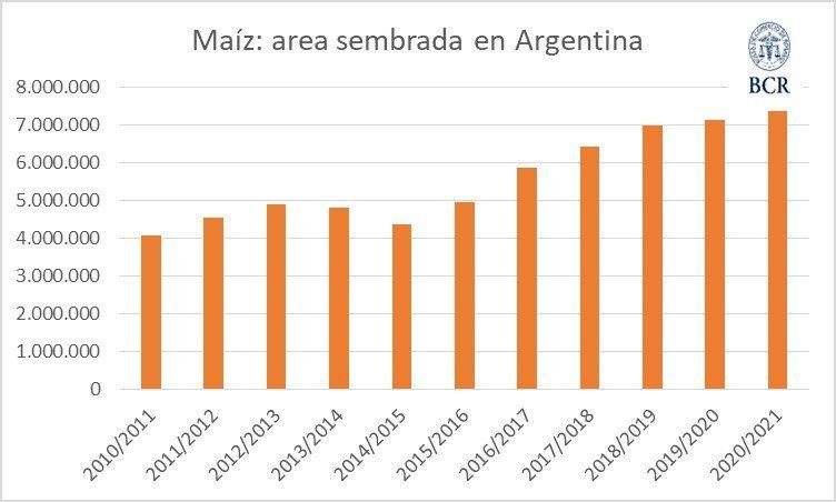La Bolsa de Comercio de Rosario estimó que la siembra de maíz seguirá con su alza que mantiene desde hace siete años.