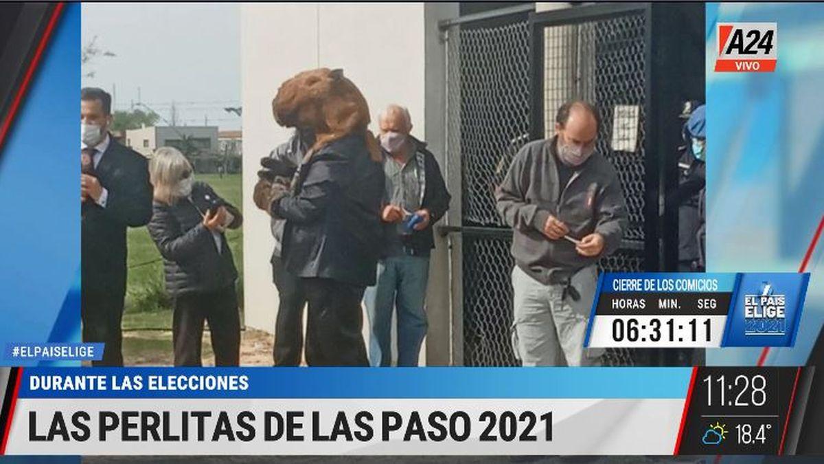 PASO 2021: las perlitas a la hora de votar en las escuelas. (Captura de Tv)