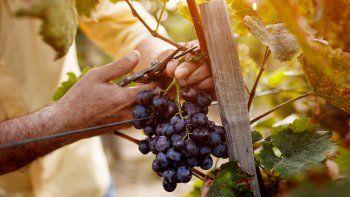 Las PyMES vitivinícolas de La Rioja se están recuperando